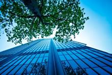 tree development applications