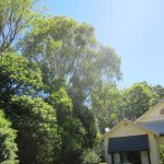 arborist tree reports