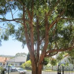 tree hazard assessment arborist